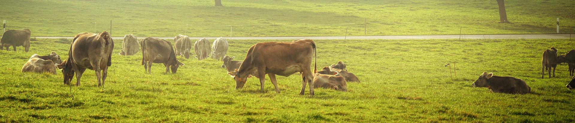 pasture-4074565-slider