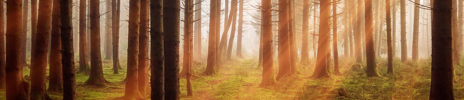 slider-forest-3448818